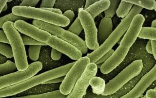 fight bad bacteria